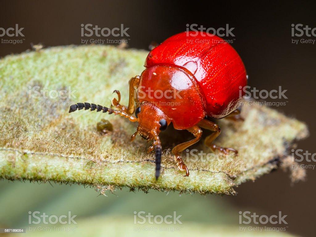 ladybug-2 stock photo