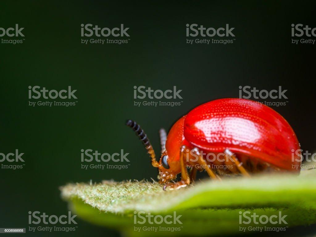 ladybug-3 stock photo
