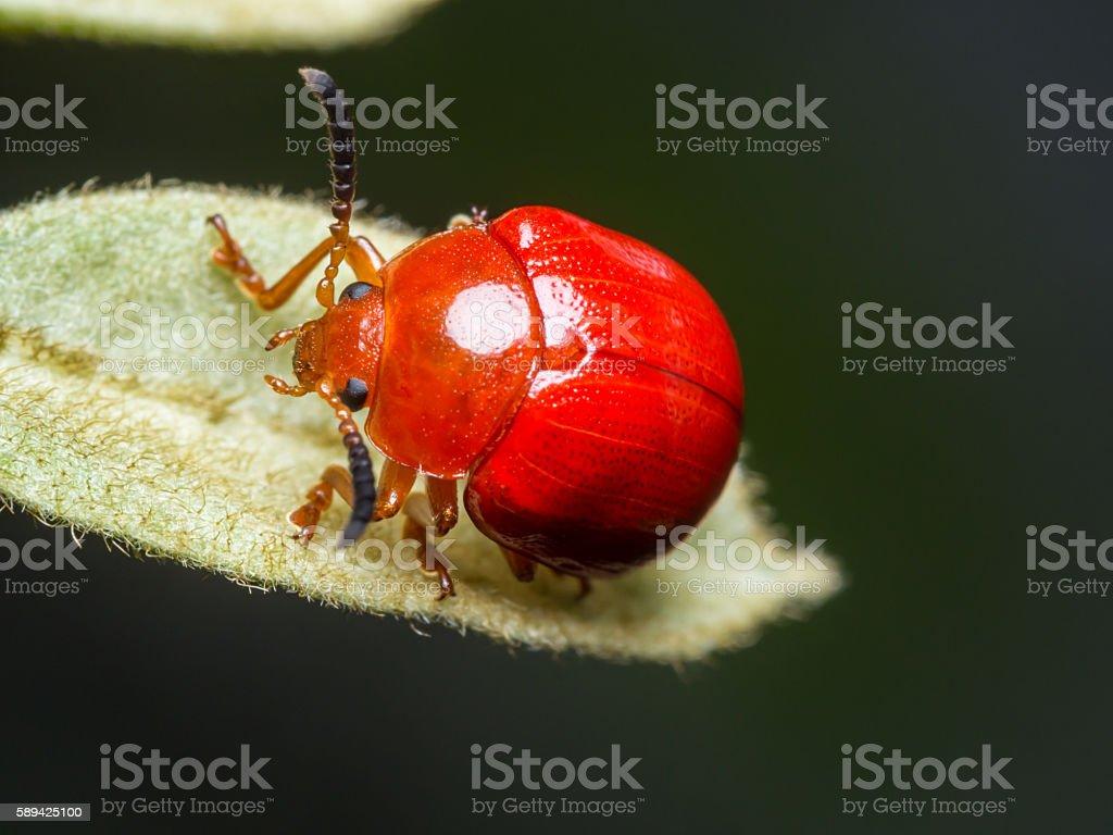 ladybug-4 stock photo