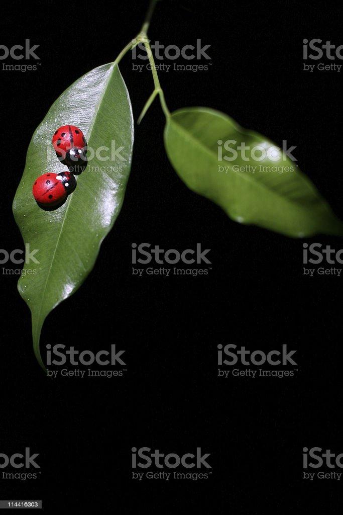 Ladybugs royalty-free stock photo