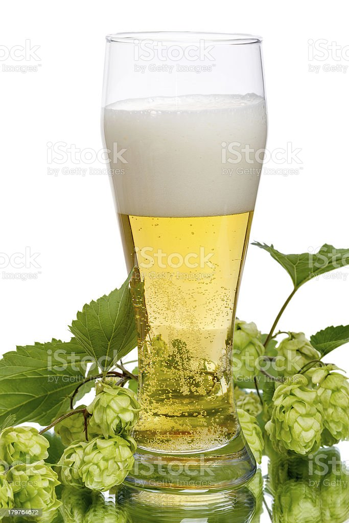 Lager beer and hops with reflection royalty-free stock photo
