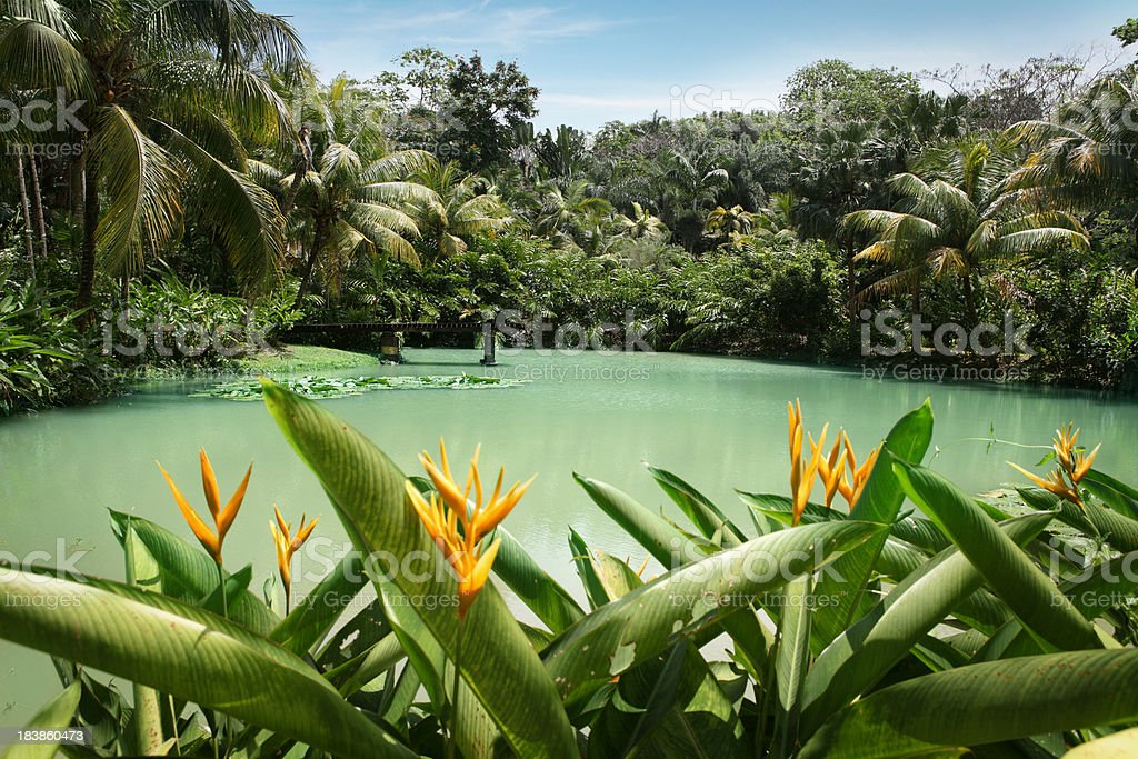 Lagoon at Cranbrook flower forest royalty-free stock photo