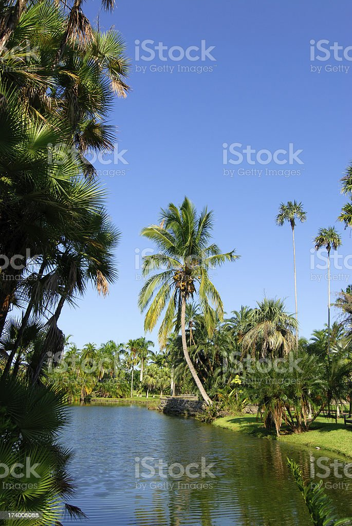 lagoon in a park royalty-free stock photo
