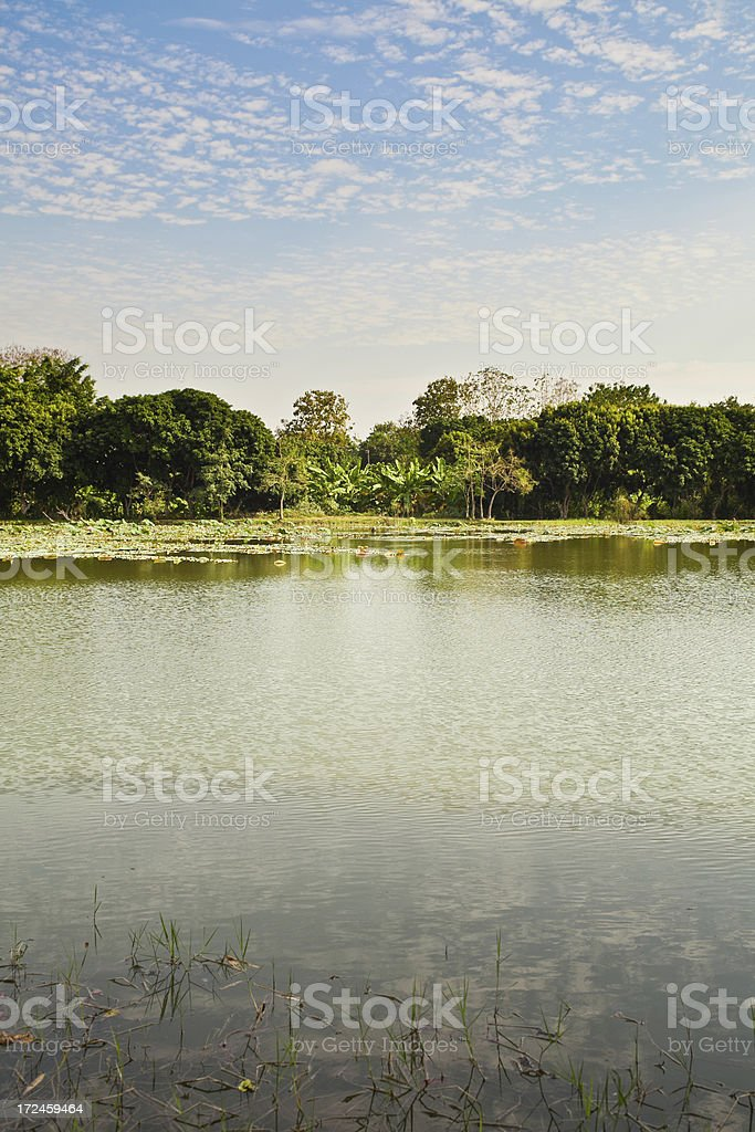 Lagoon in Thailand royalty-free stock photo
