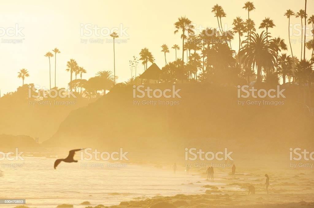 Laguna Beach Sunset - Seagull stock photo