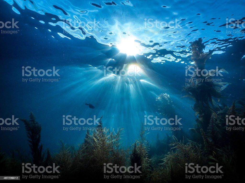 Laguna Beach Underwater Sunburst, Reef, Kelp stock photo