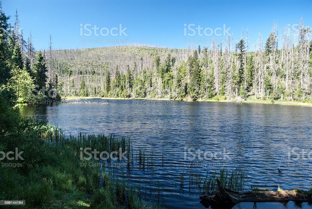 Laka mountain lake in Sumava mountains stock photo