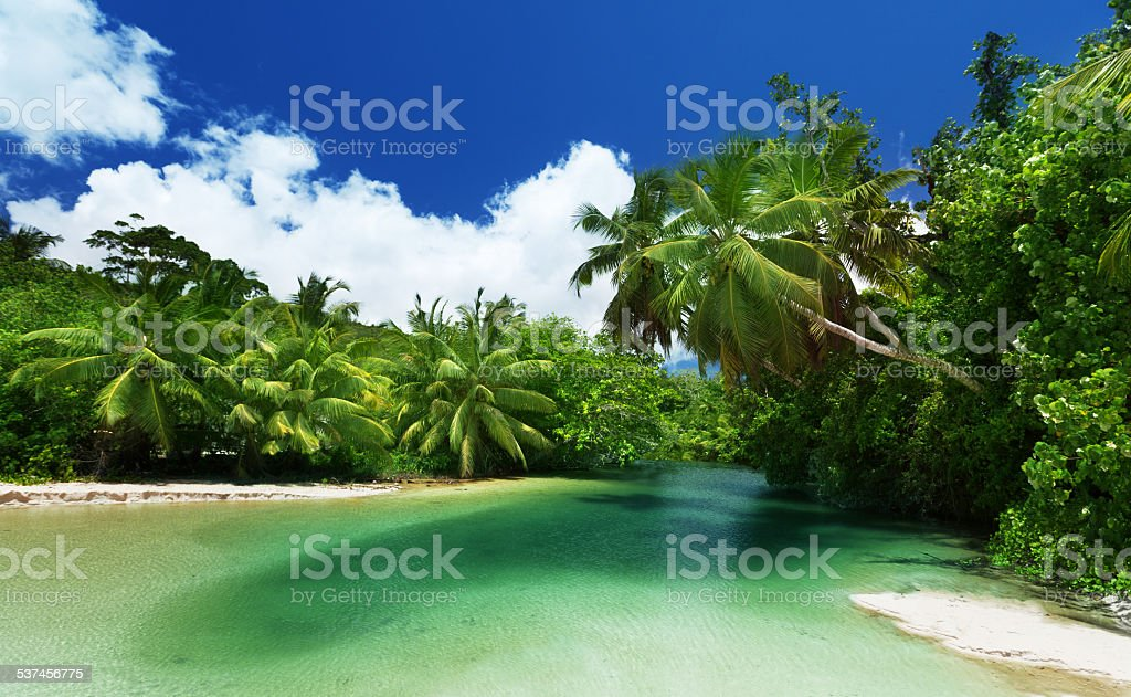 lake and palms, Mahe island, Seychelles stock photo