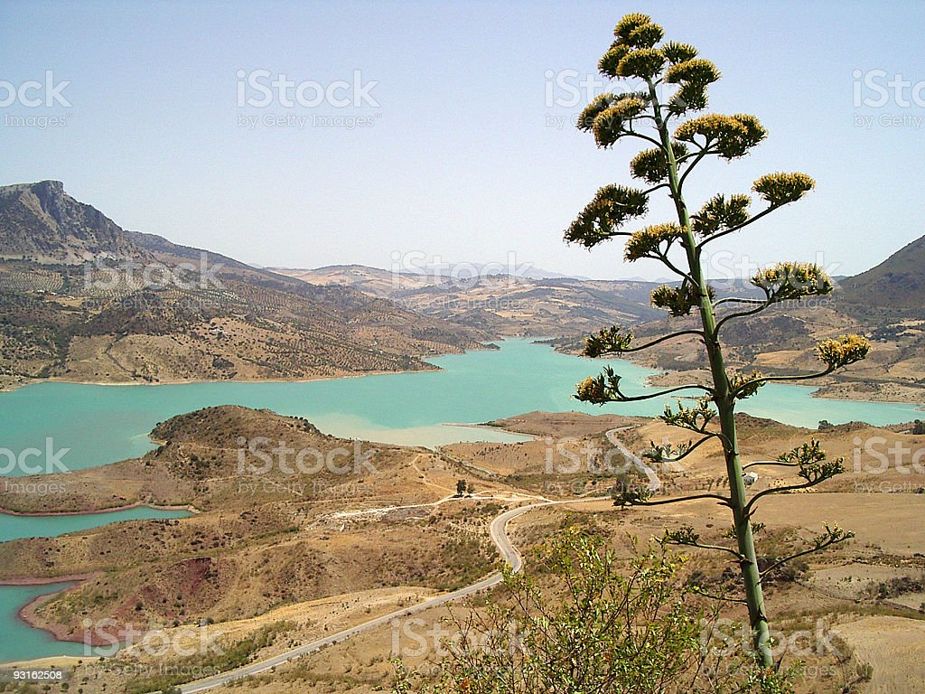 Lake and prickle royalty-free stock photo