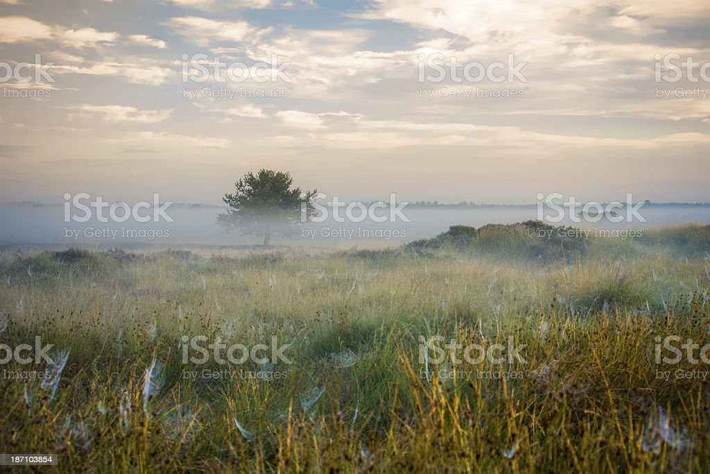 Lake and swamps area at Misty morning royalty-free stock photo