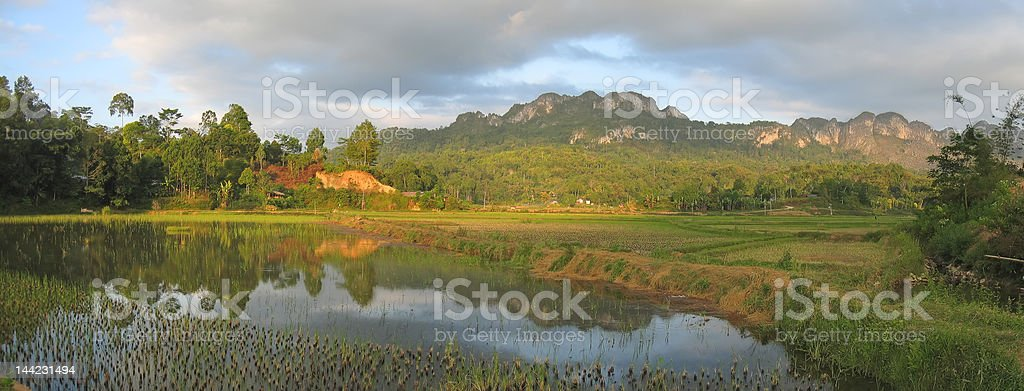Lake and the ricefields stock photo