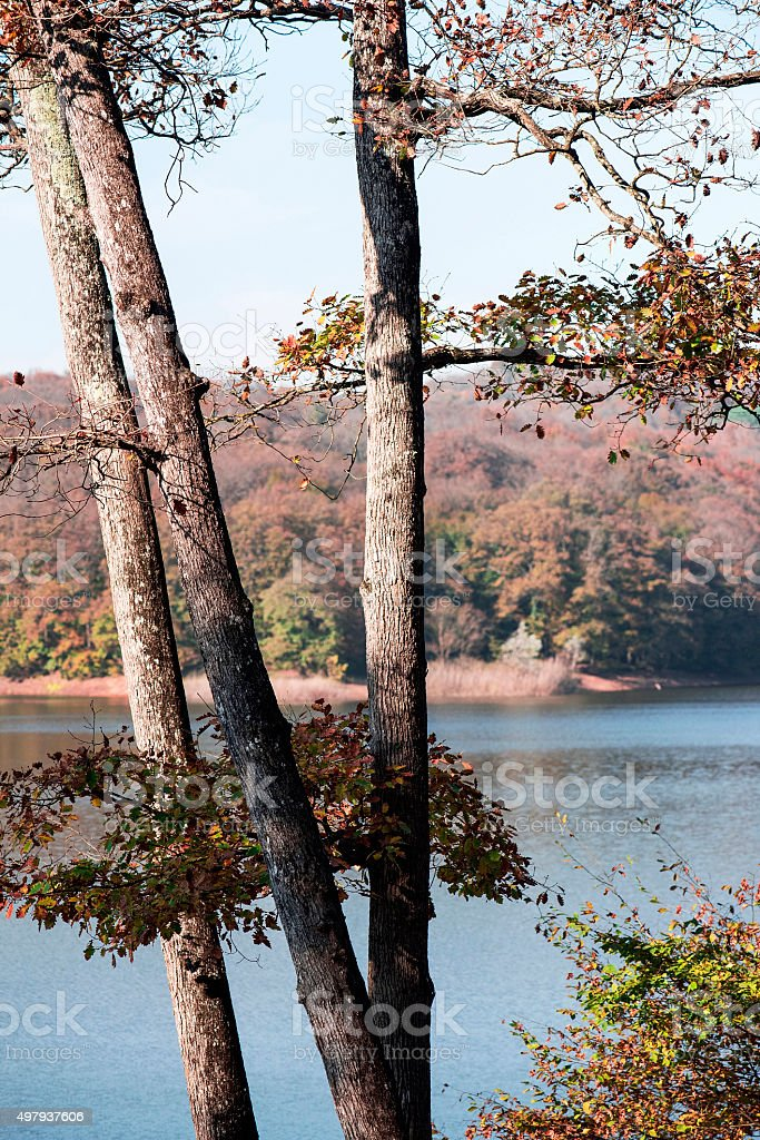 Lake and Trees in Autumn stock photo