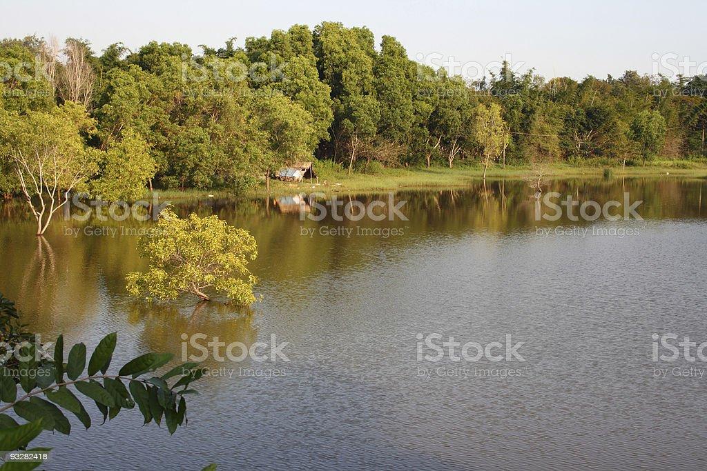 Lake and trees stock photo
