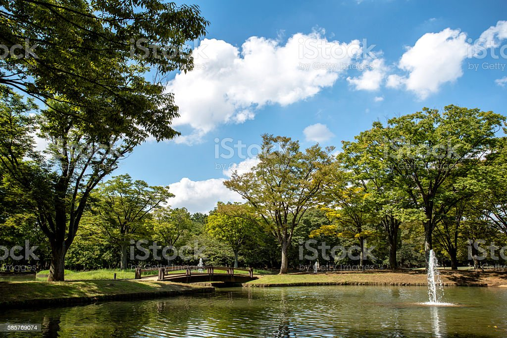 lake and woods in park stock photo