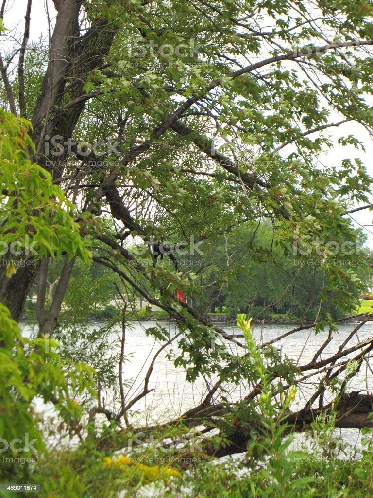 Lake Champlain, Plattsburgh Bay, New York with green trees stock photo