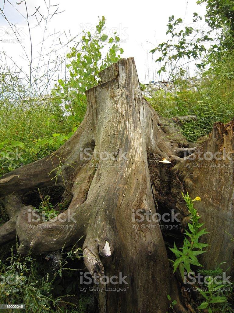 Lake Champlain, Plattsburgh, NY tree trunk stock photo