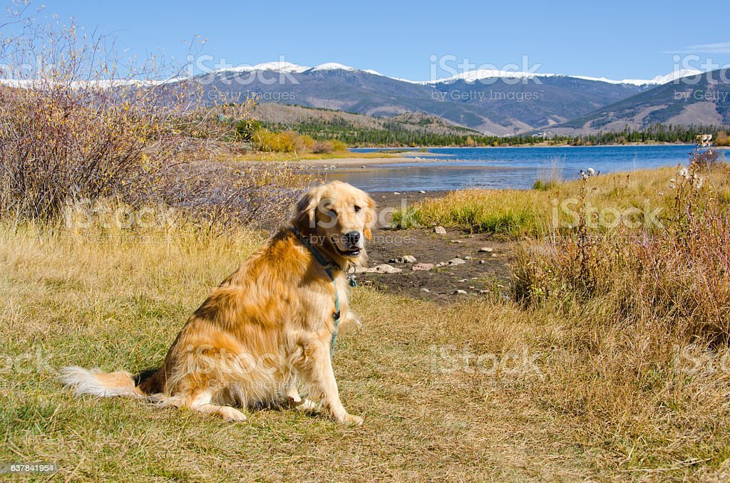 Lake Dillon in Autumn with Golden Retriever stock photo