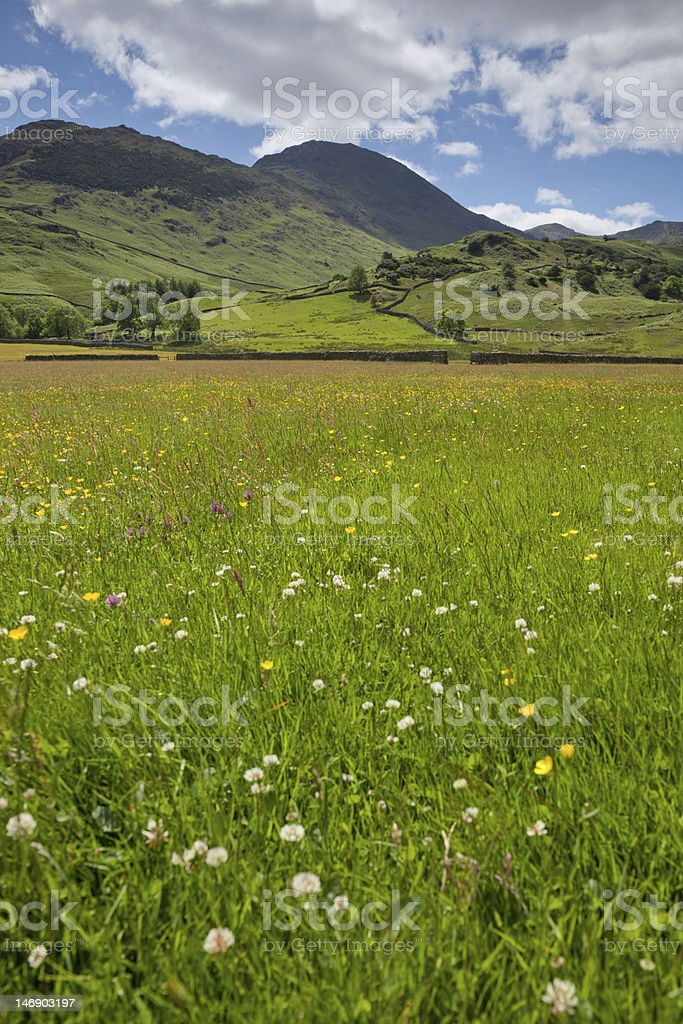 Lake District Meadow/Pasture in Summer (Wrynose Pass, Little Langdale) stock photo