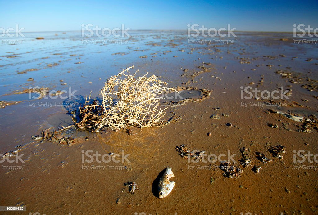 Lake Eyre, South Australia, Australia royalty-free stock photo