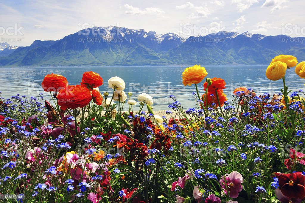 lake, flowers, Mountains in swiss Apls royalty-free stock photo