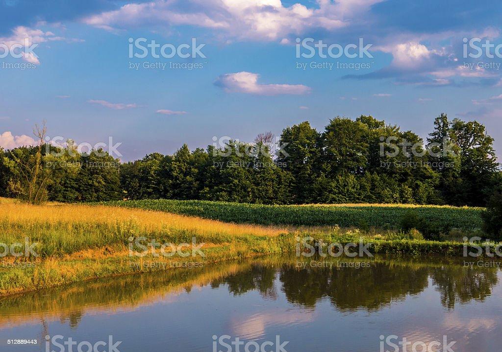 Lake forest e céu foto royalty-free