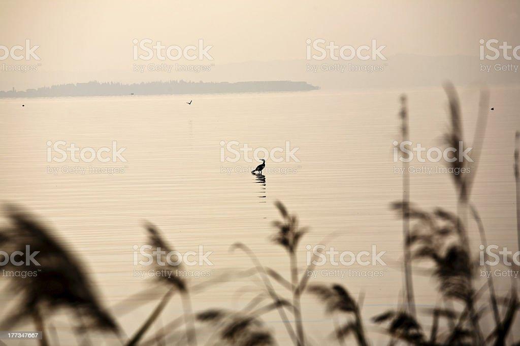 Lake Garda and birds stock photo