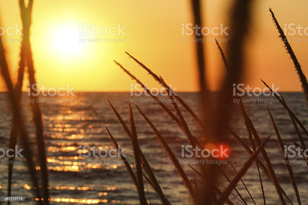 Lake Grass stock photo