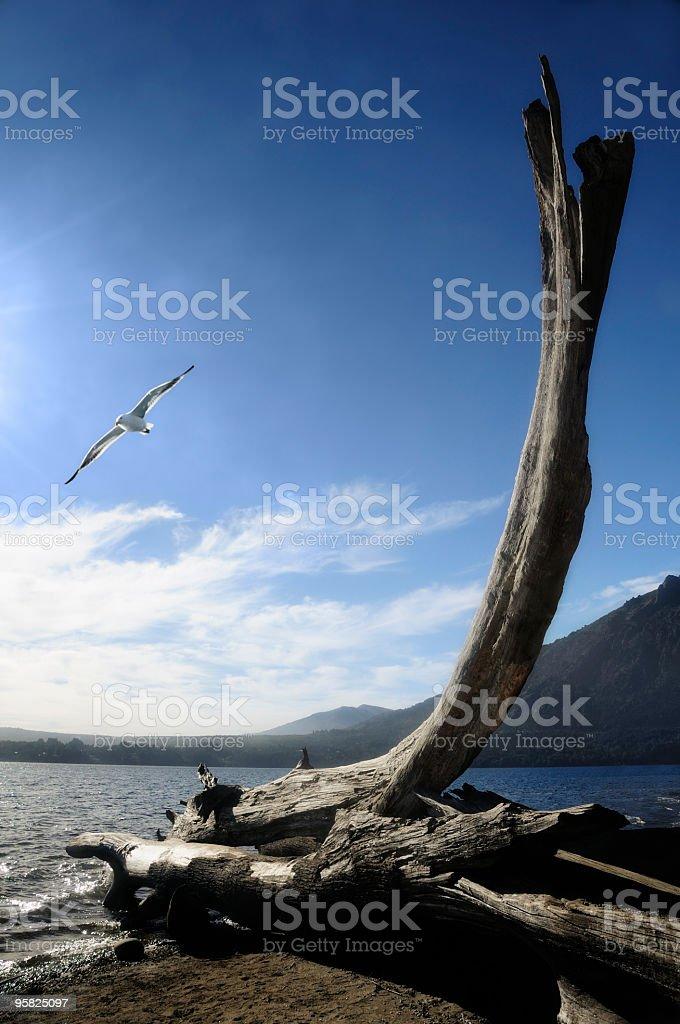 Lake Gutierrez, Bariloche, Patagonia, Argentina royalty-free stock photo