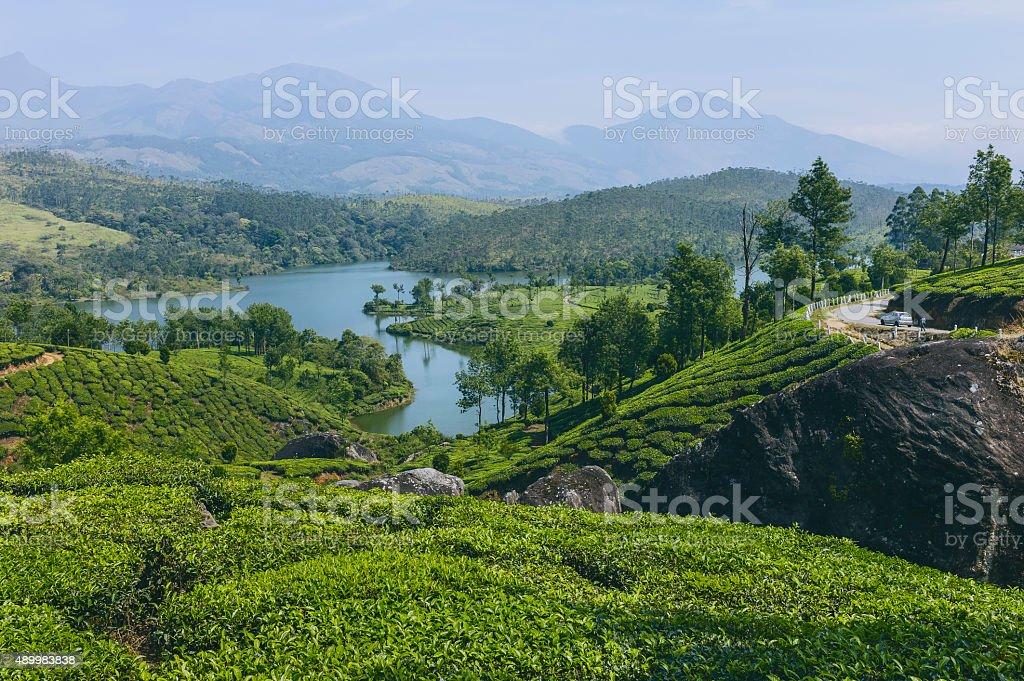 Lake in a tea plantation, Munnar, Kerala, India. stock photo