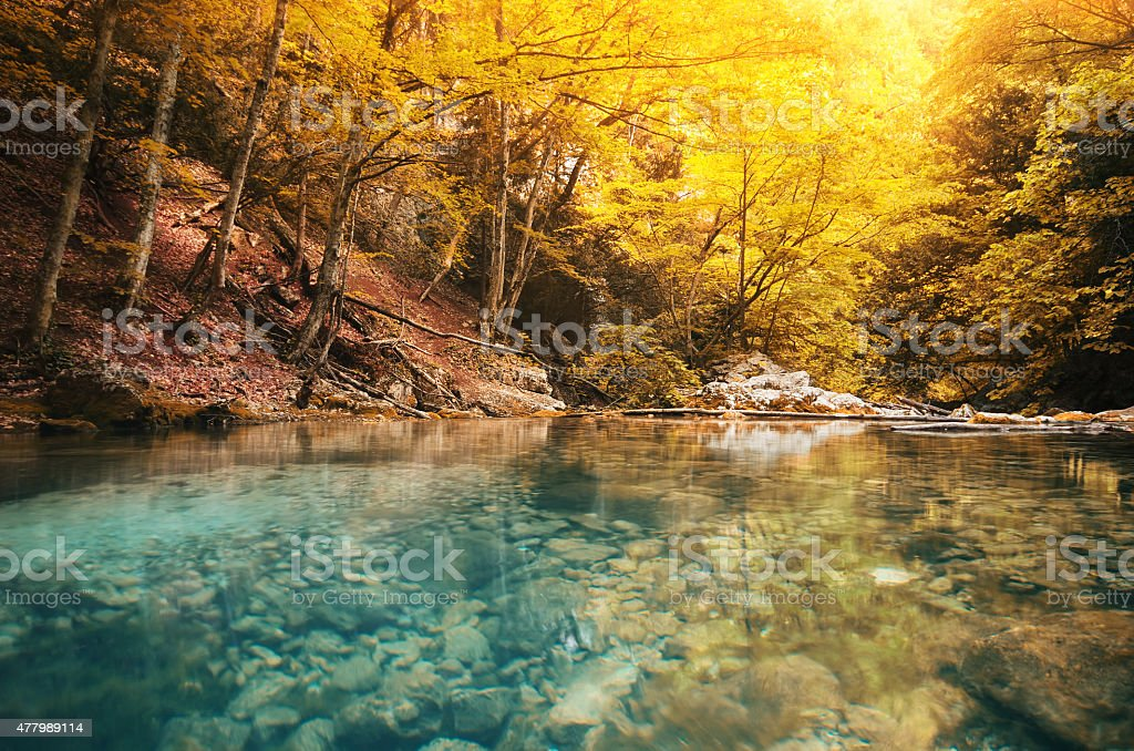 Lake in forest stock photo