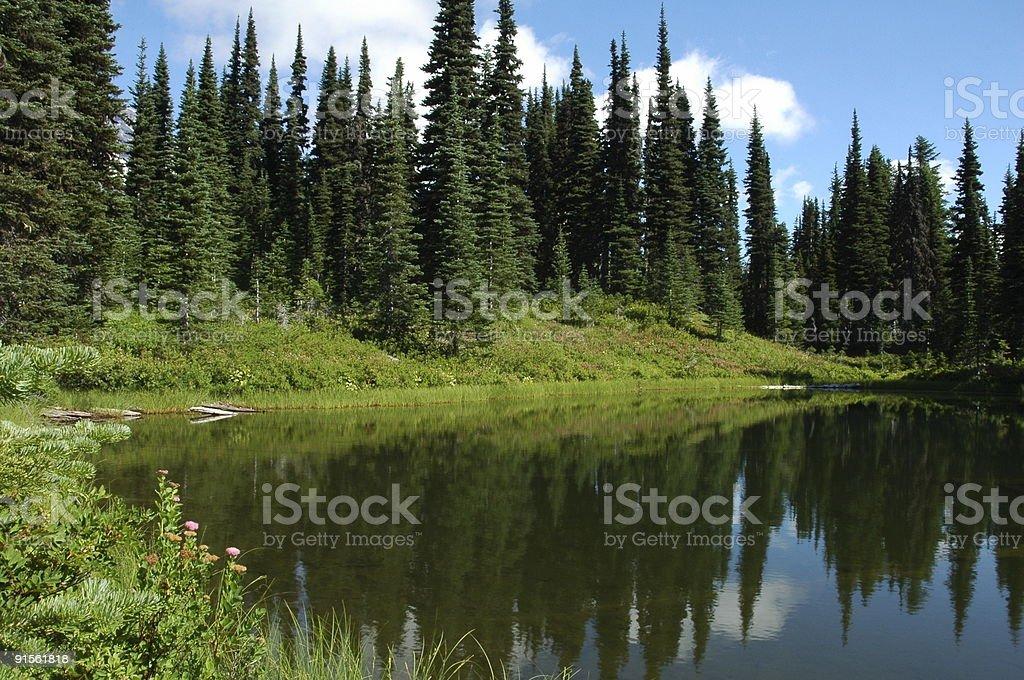 Lake in Mount Rainier National Park royalty-free stock photo