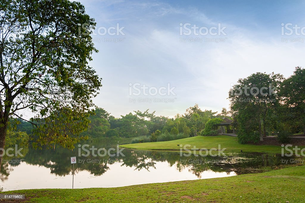 lake in park surrounded by green field and trees stock photo