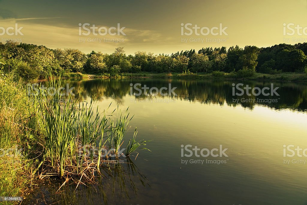 Lake in summer (warm filter) royalty-free stock photo