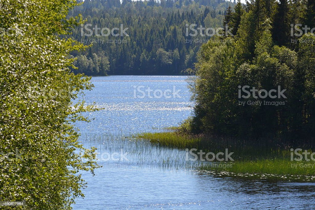 Lake in sunshine royalty-free stock photo