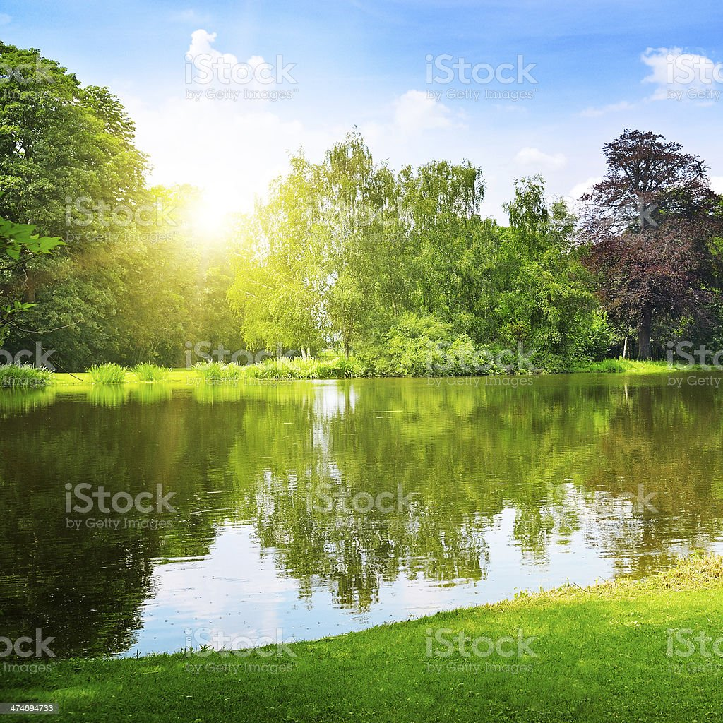 lake in the summer park stock photo