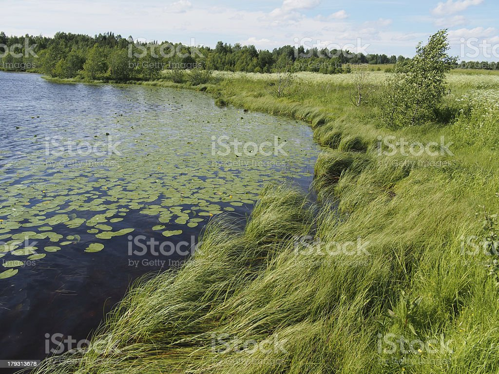 Lake in the summer royalty-free stock photo