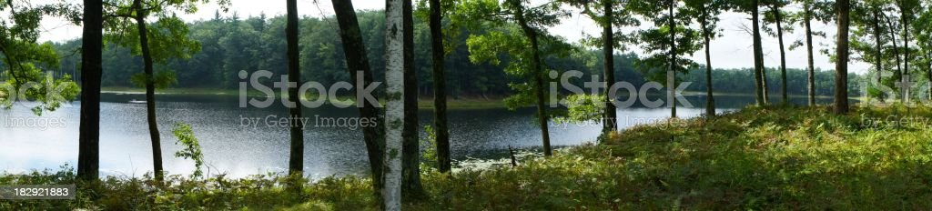 Lake in the woods royalty-free stock photo