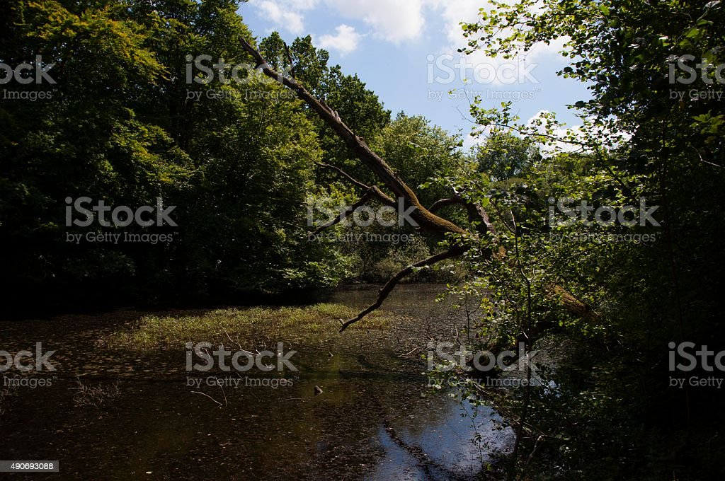 Lake in the woods stock photo