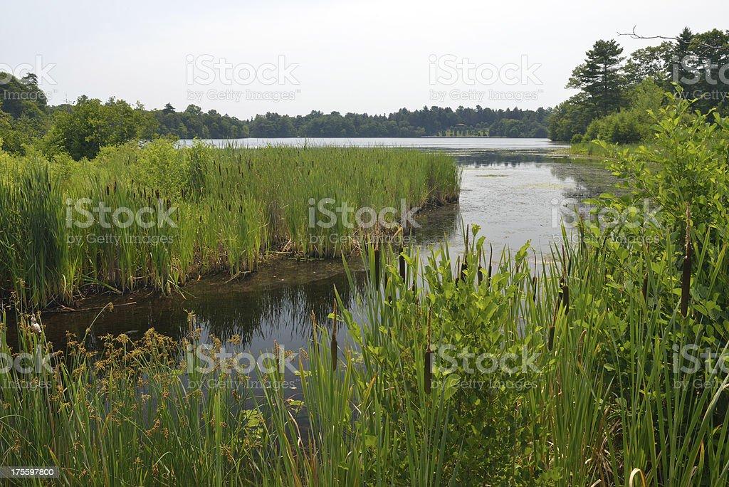 Lake in Wellesley stock photo