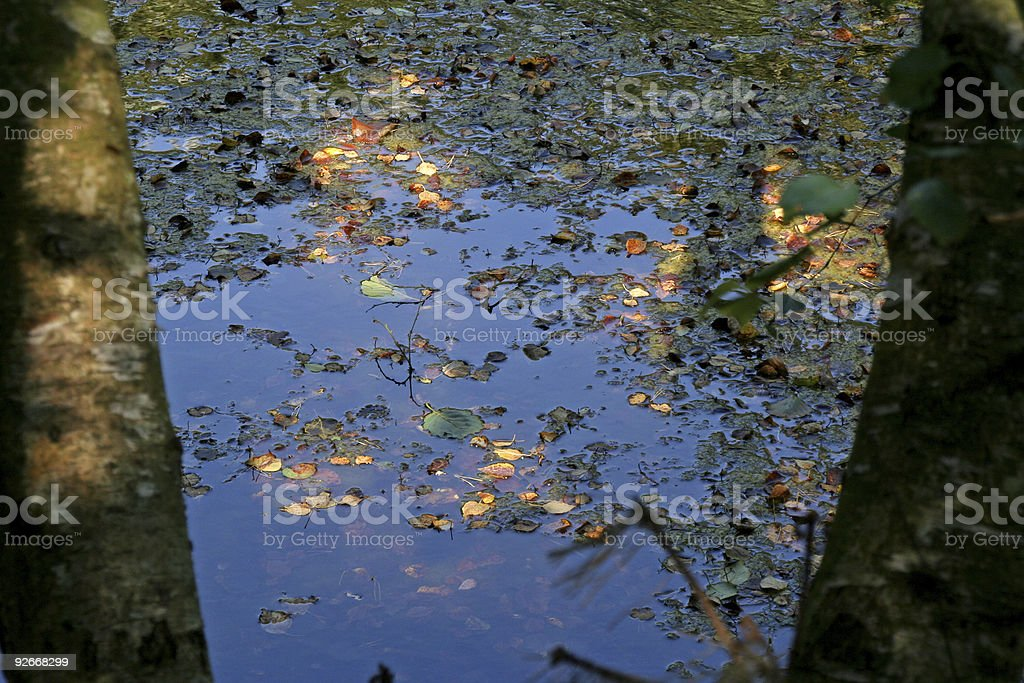 Lake, leaves and sun royalty-free stock photo