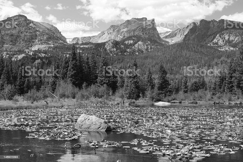 Lake Lillies stock photo
