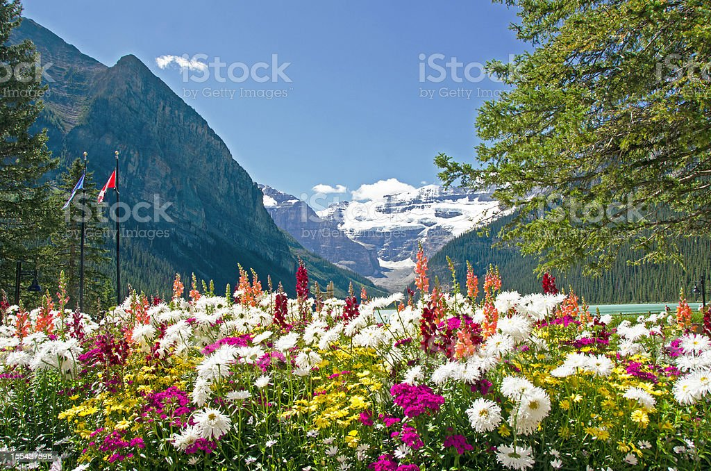 Lake Louise Summer  Flowers stock photo