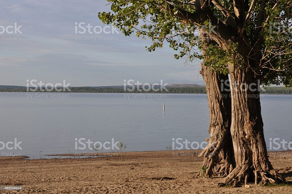 Lake Lowell Beach Trees stock photo