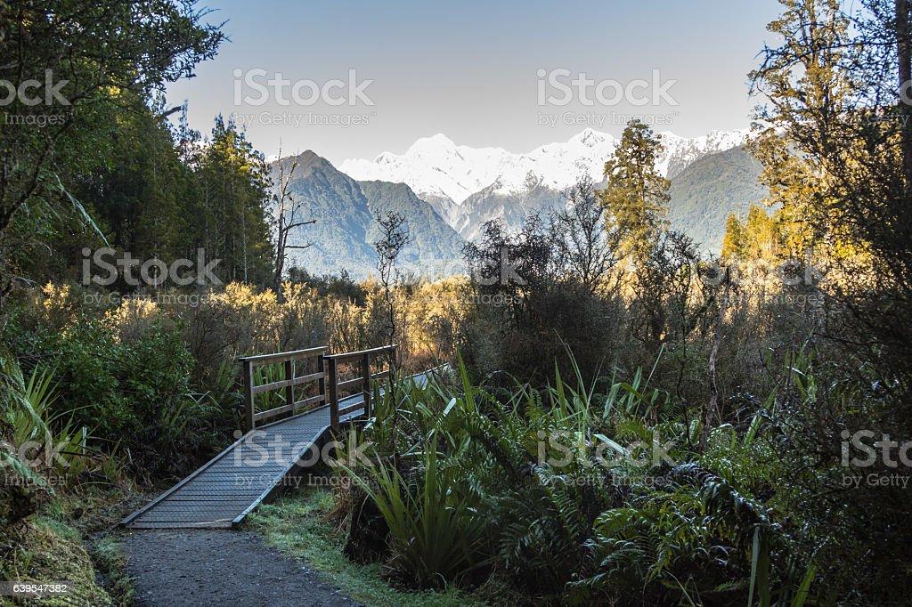 Lake Matheson track stock photo