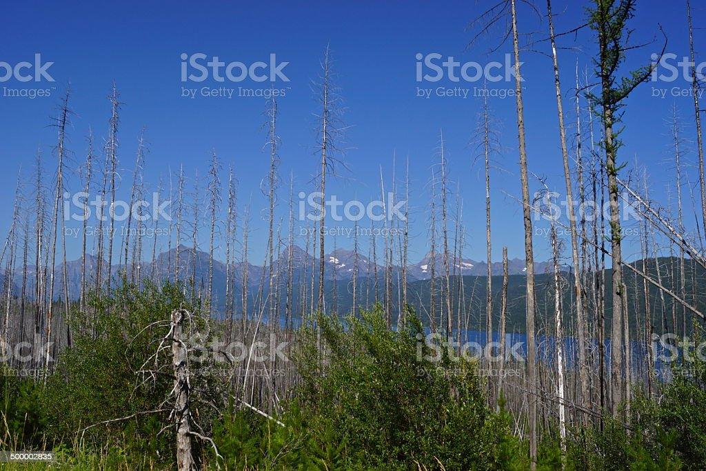 Lake McDonald Glimpse stock photo