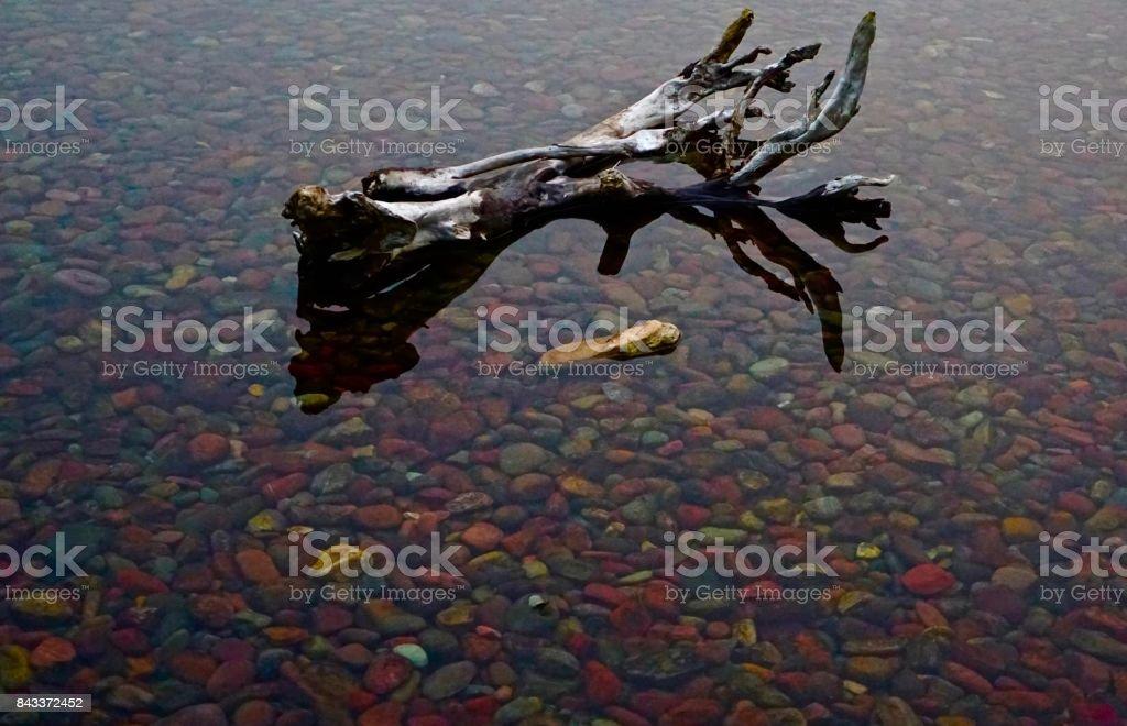 Lake McDonald Wood stock photo