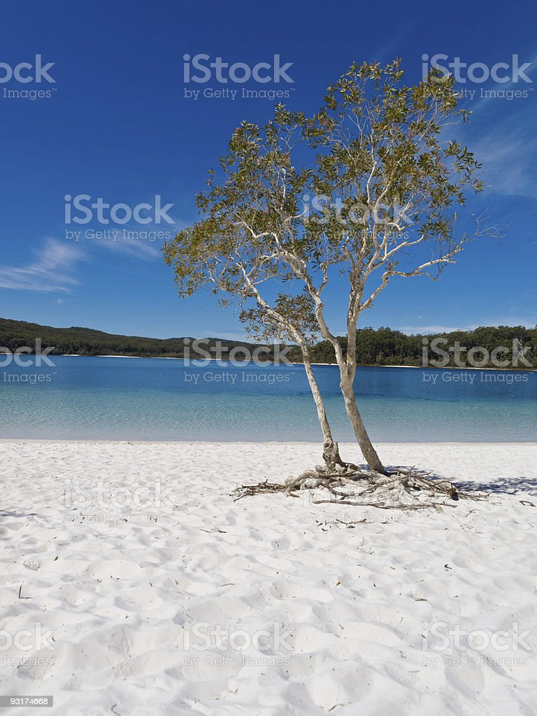 Lake McKenzie, Fraser Island royalty-free stock photo