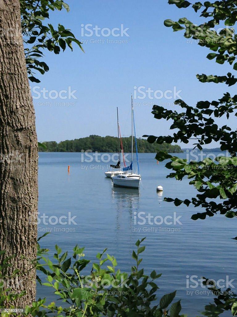 Lake Menona, Madison, Wisconsin Sail Boat, Tree Branches and Trunk stock photo
