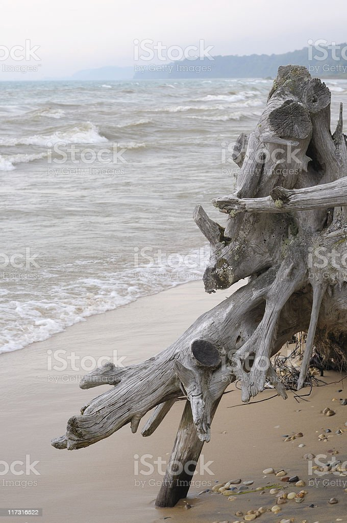Lake Michigan Driftwood royalty-free stock photo
