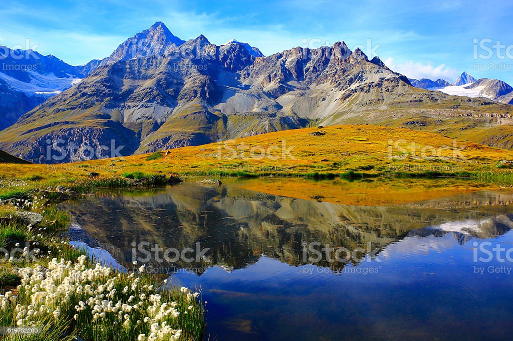 Lake mirrored swiss alps reflection, cotton wildflowers Field, Zermatt stock photo